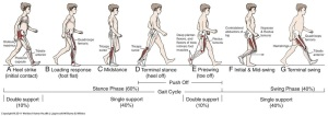 Gait-Cycle